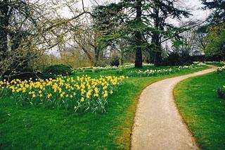 daffodil03.jpg